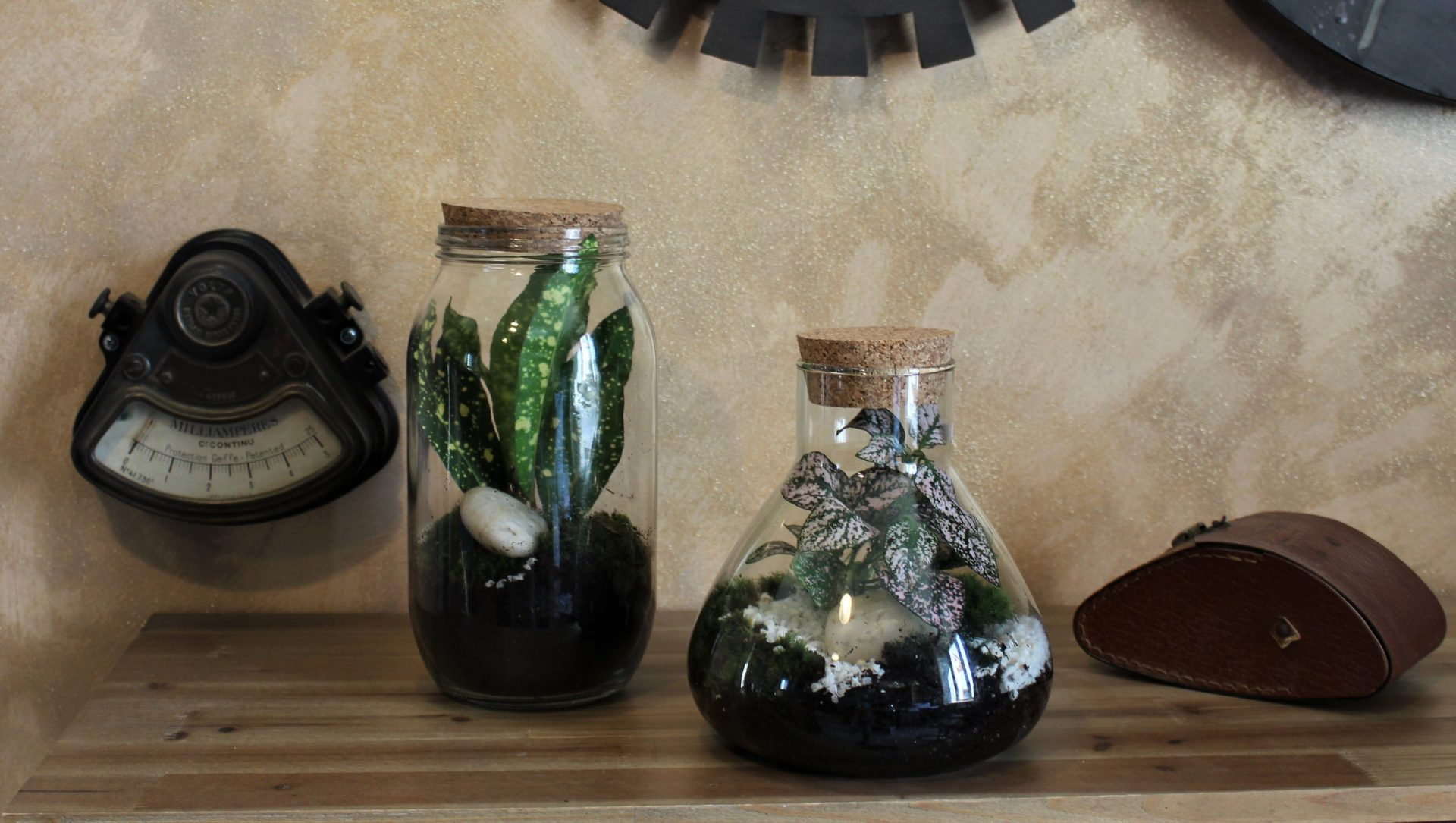 terrarium décoratif
